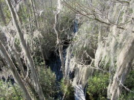 Okefenokee Swamp from above