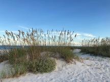 Golden Sea Oats-Folly Field Beach S Carolina